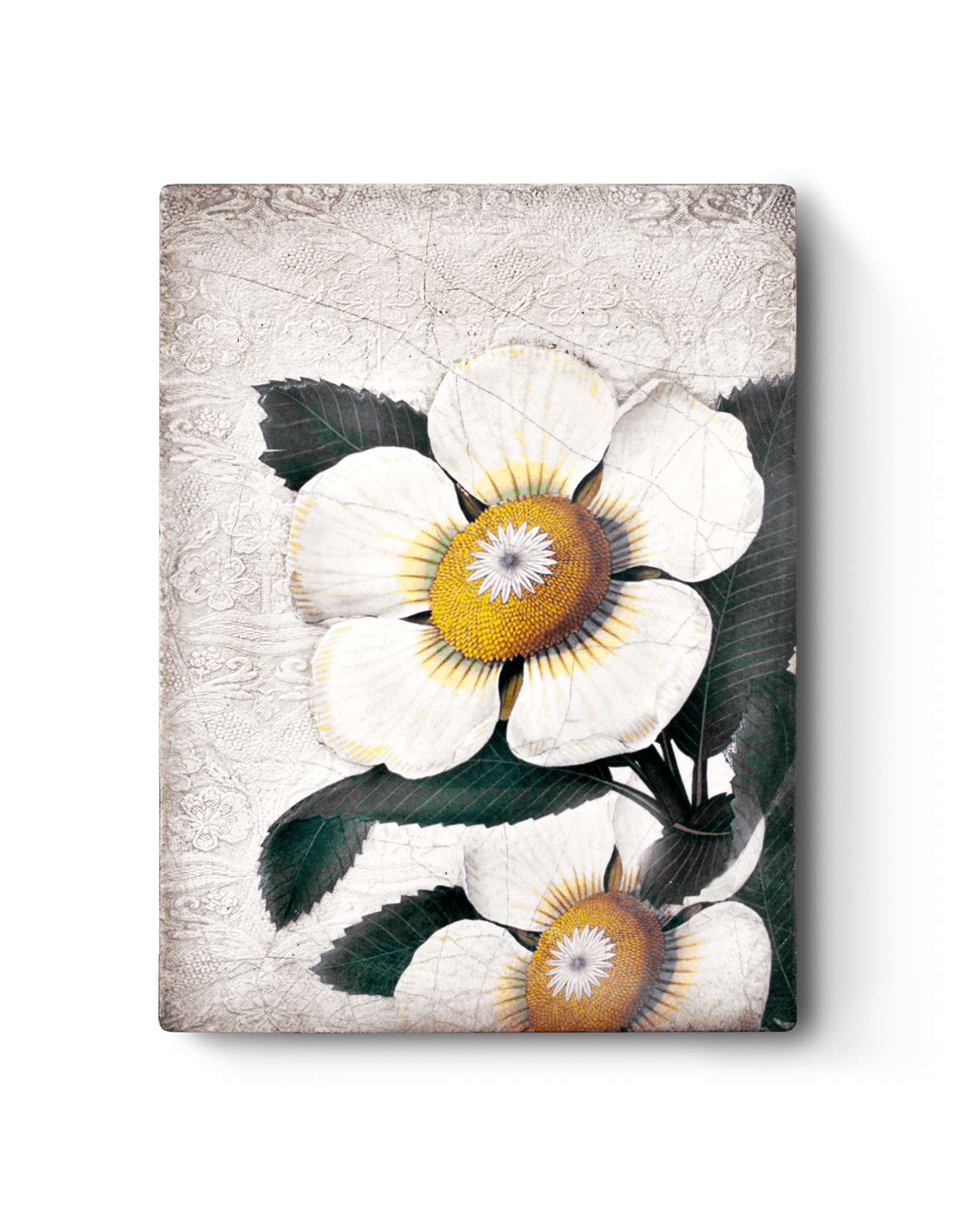 Sid Dickens T487 White Blossom