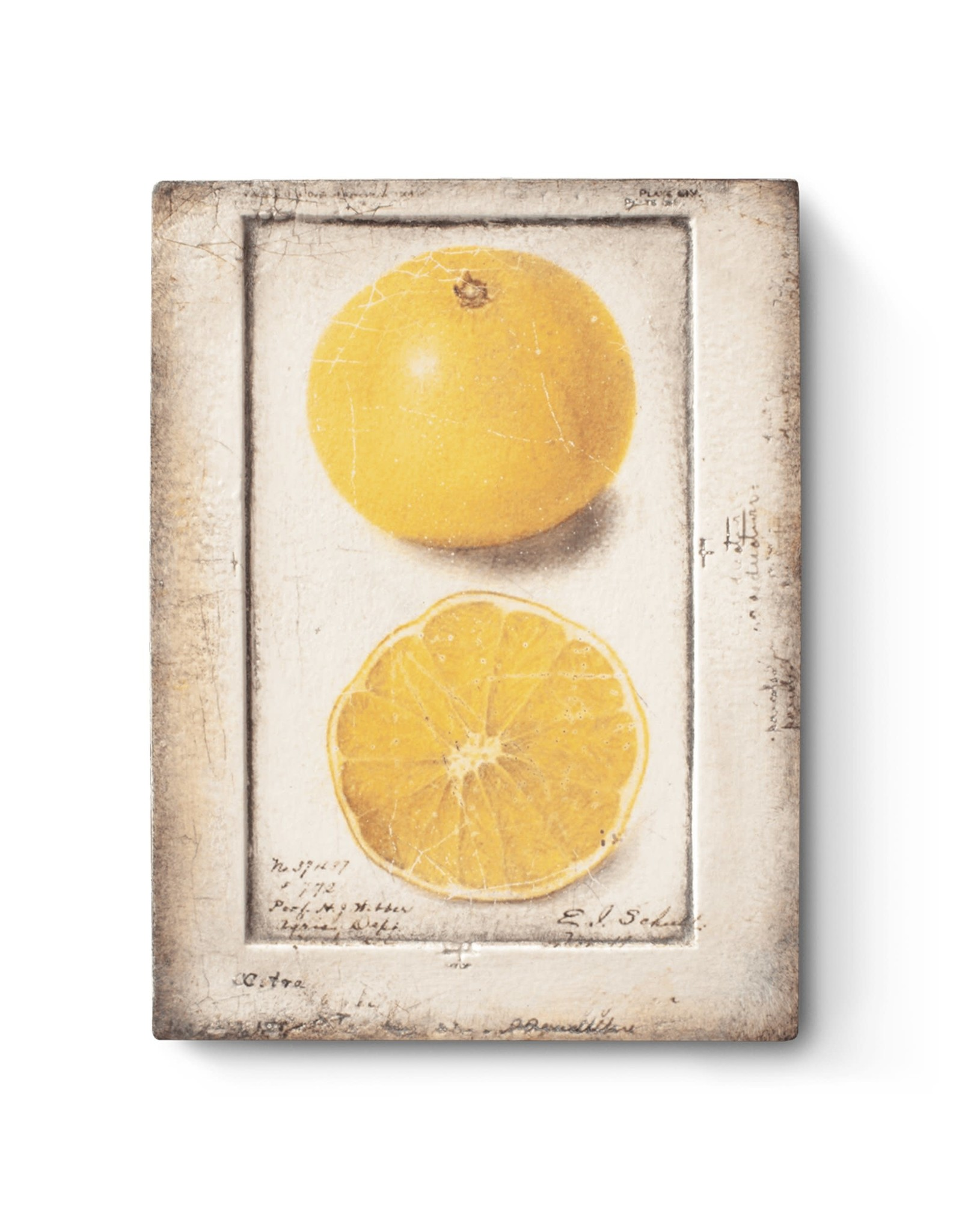 Sid Dickens T371 Citron