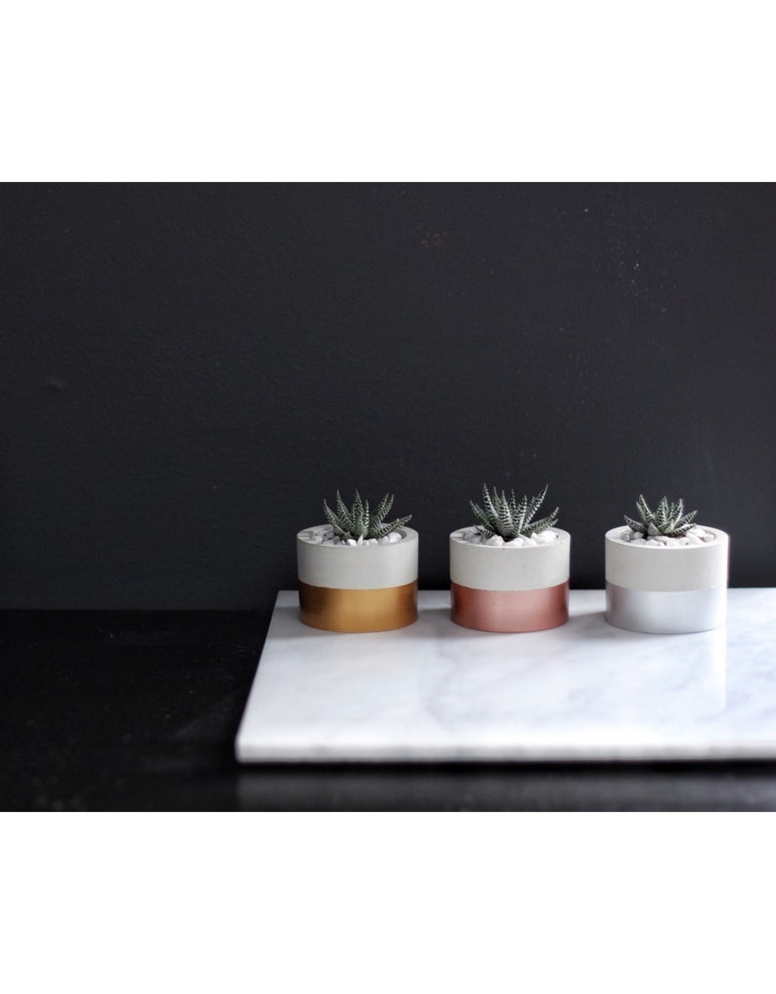 Mind The Minimal Cylinder Planter - Silver w/  Plant