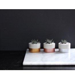 Mind The Minimal Cylinder Planter - Rose Gold w/  Plant