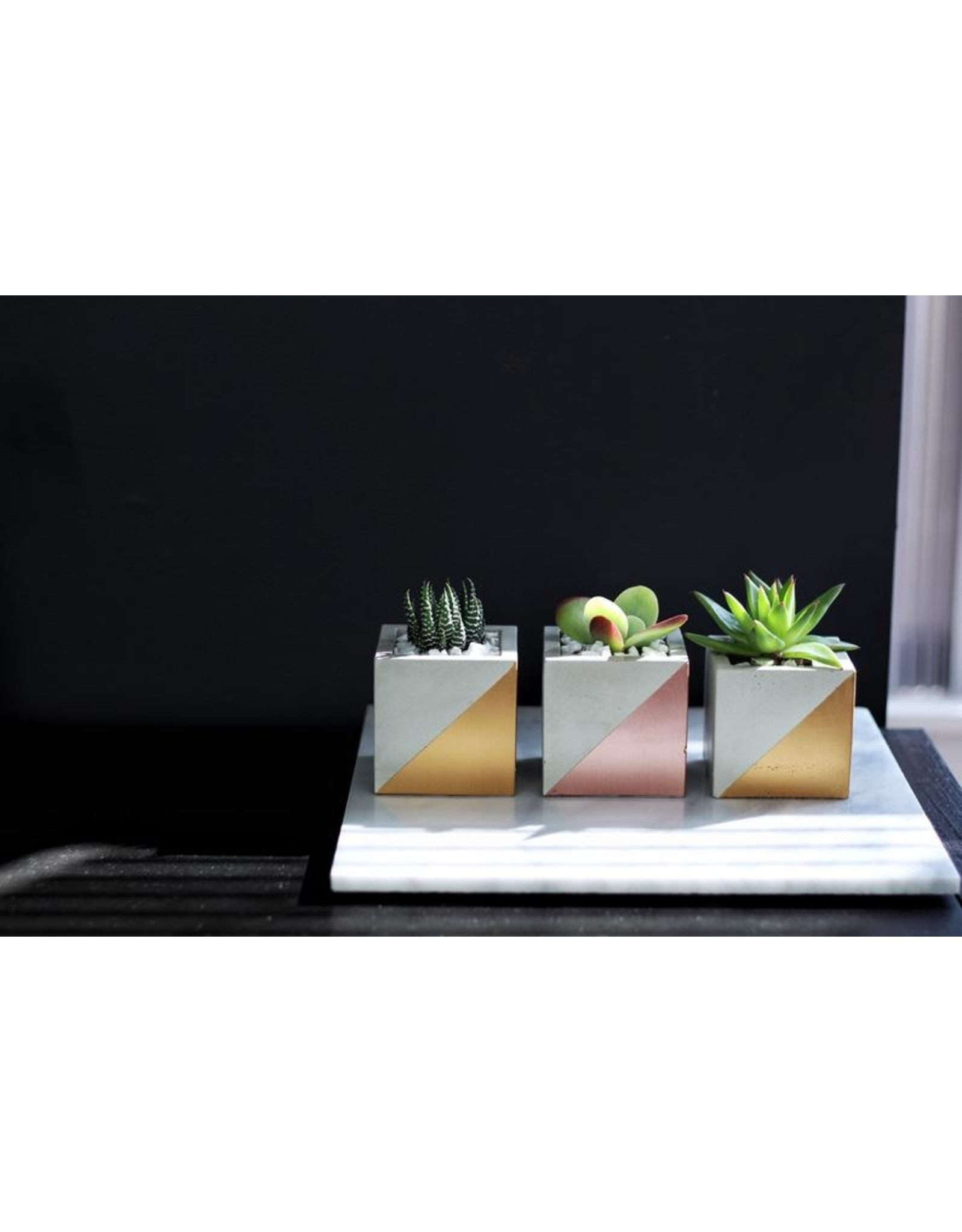 Mind The Minimal Cube Planter - Gold w/  Plant