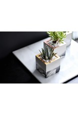 Mind The Minimal Cube Planter - Marble Gold w/  Plant