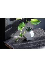 Mind The Minimal Dode Planter - White w/  Plant