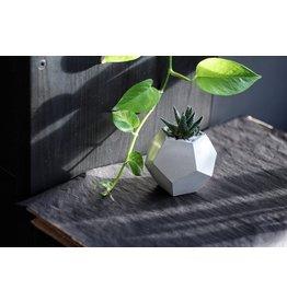 Mind The Minimal Dode Planter - White w/  Plant