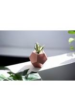 Mind The Minimal Dode Planter - Blush Pink w/  Plant