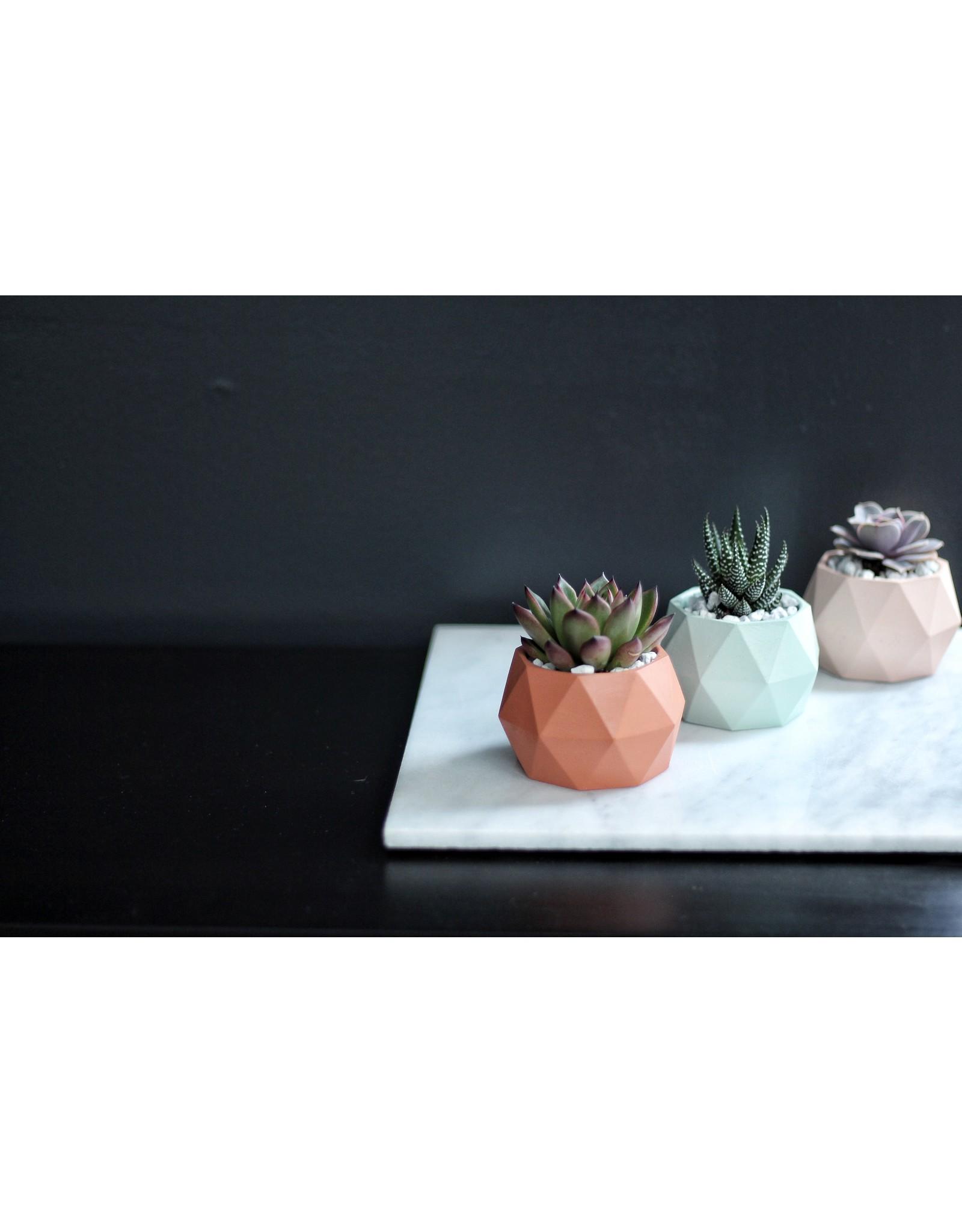 Mind The Minimal Sphere Planter - Mint Green w/  Plant
