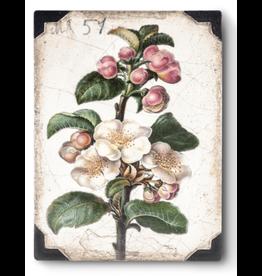Sid Dickens T462 Apple Blossom