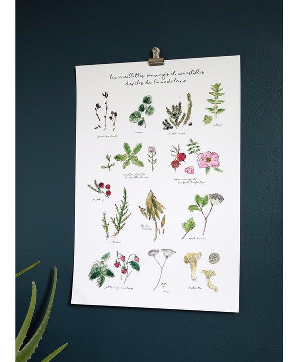 Affiche 13 X 19, Herbier