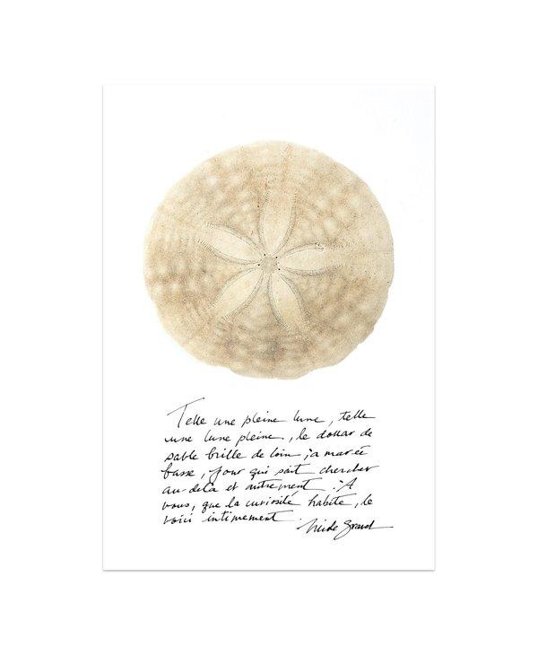 Affiche photo, 13 X 19, Dollar de sable