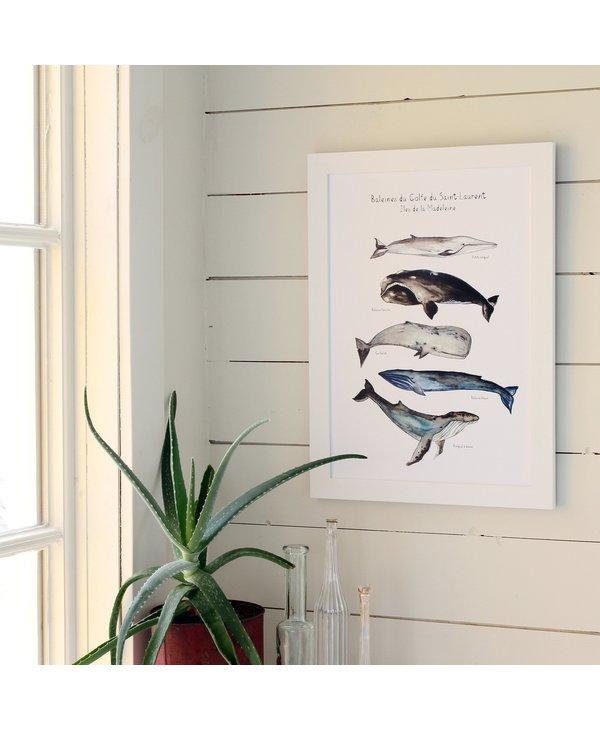 Affiche 13 X 19, 5 baleines