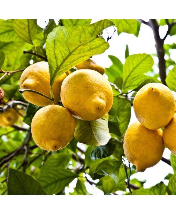 Huile essentielle, zeste citron bio 15 ml