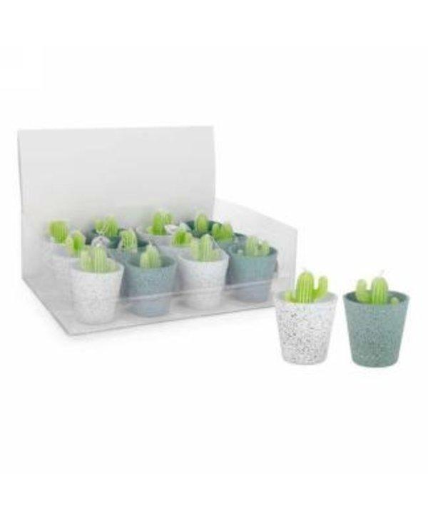 Chandelles Cactus