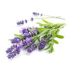 Lavender (seed pkg)