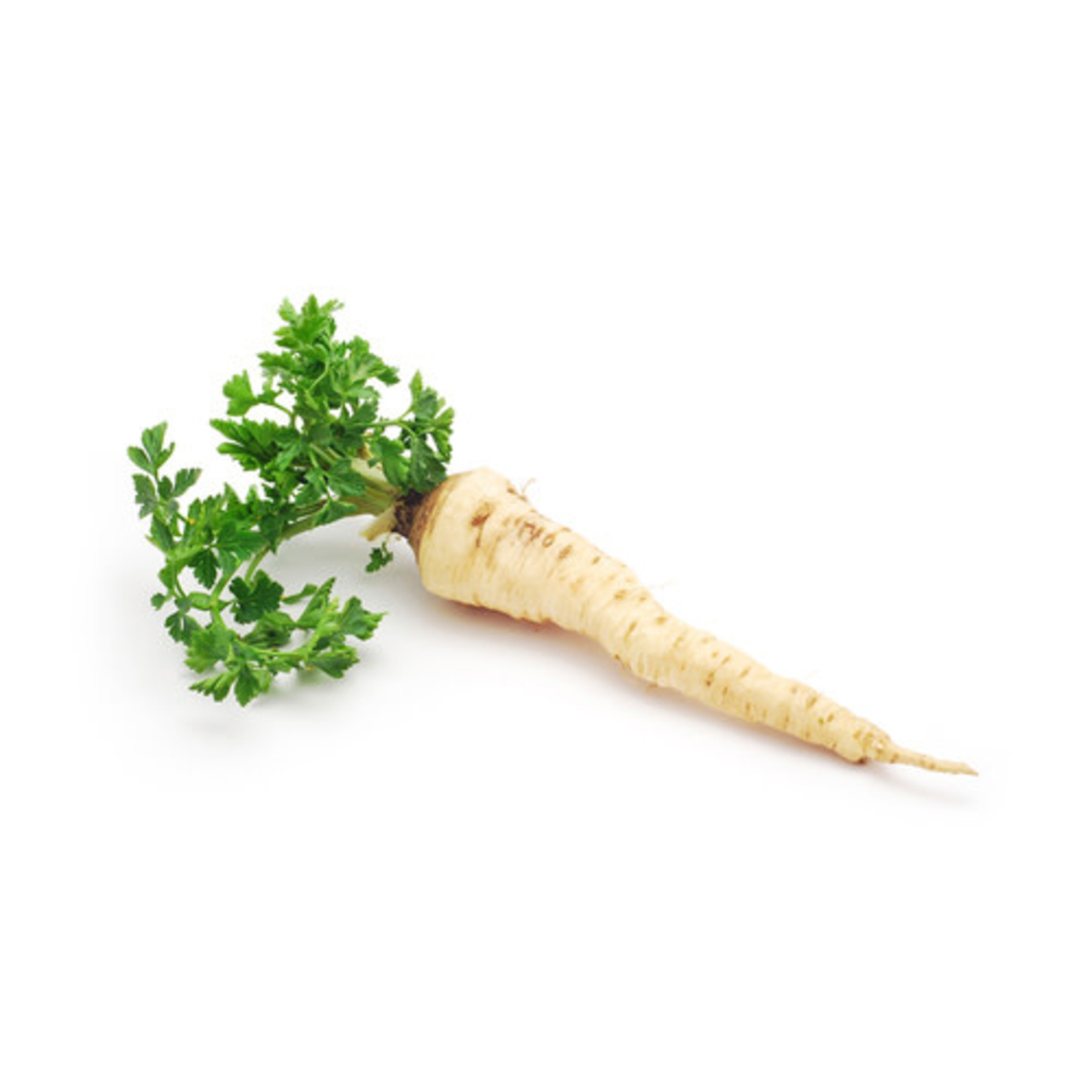 Parsley Root (seed pkg)
