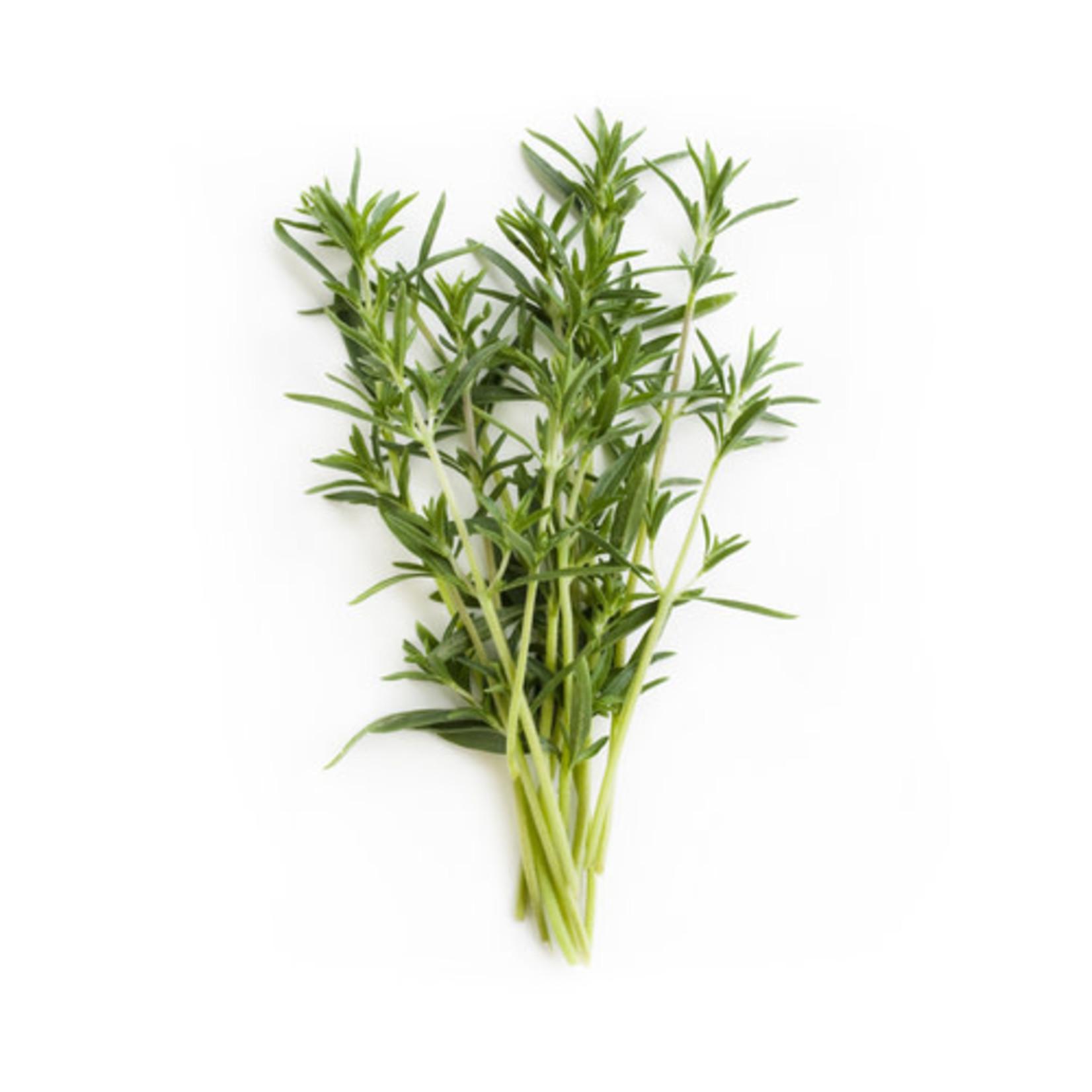 Summer Savory (seed pkg)