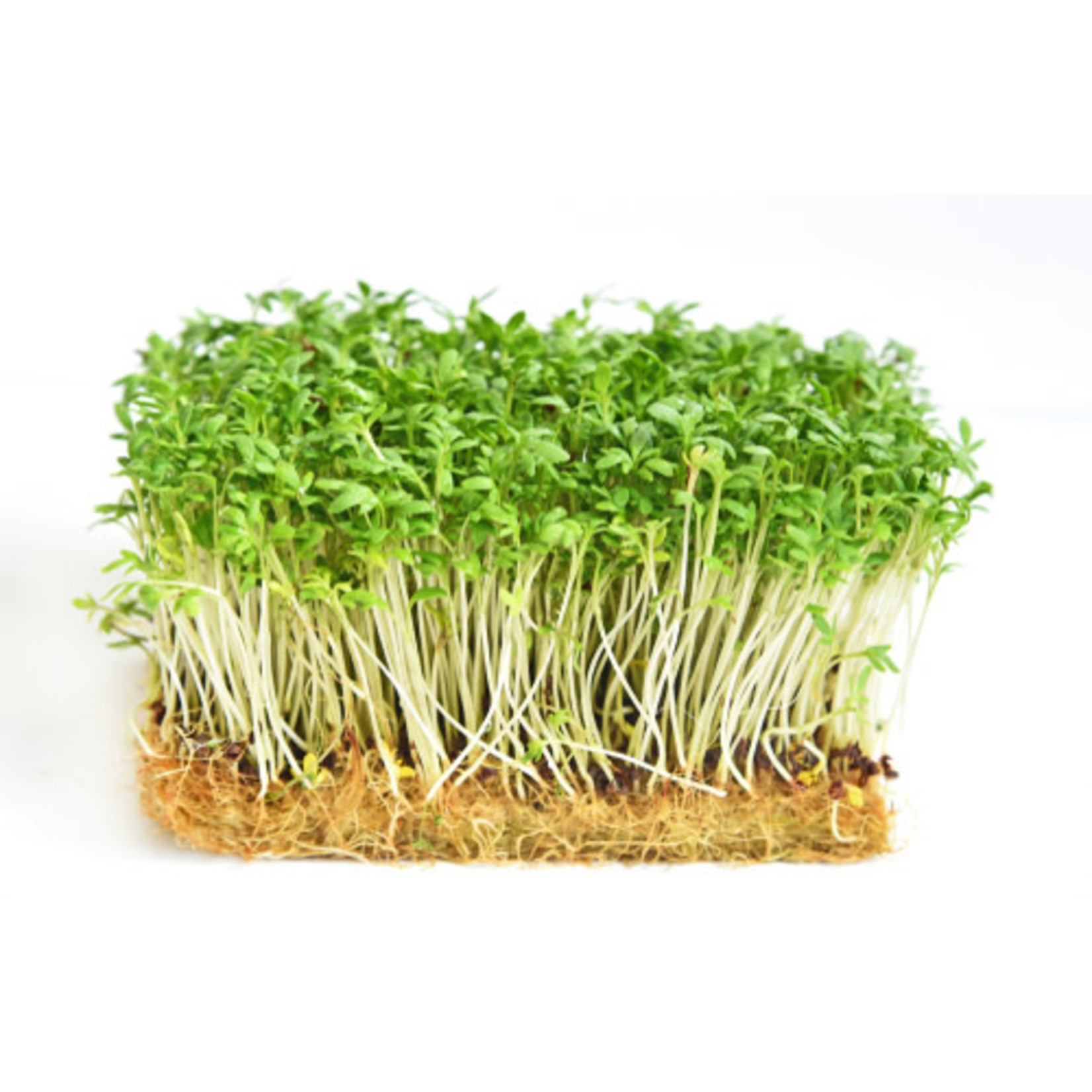 Cress (seed pkg) - Extra Curled Pepper Grass