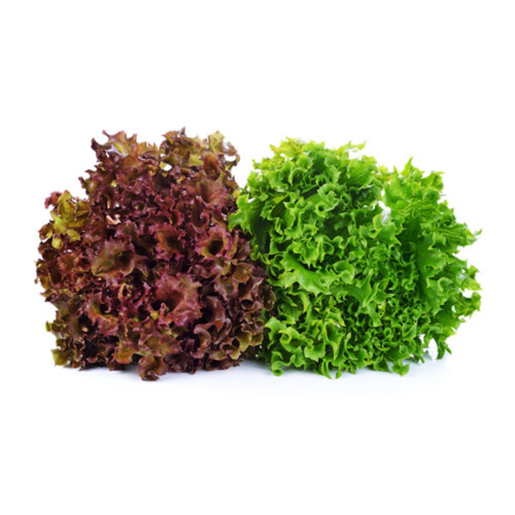 Leaf Lettuce (seed pkg)