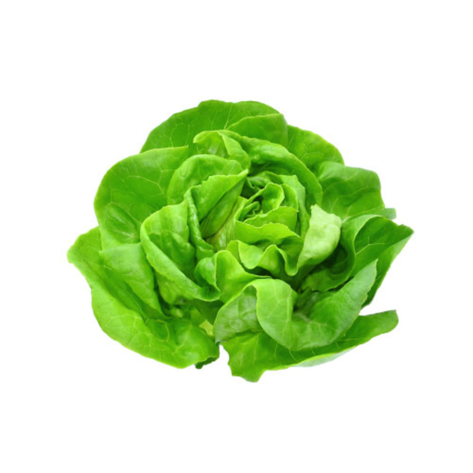 Head Lettuce (seed pkg)