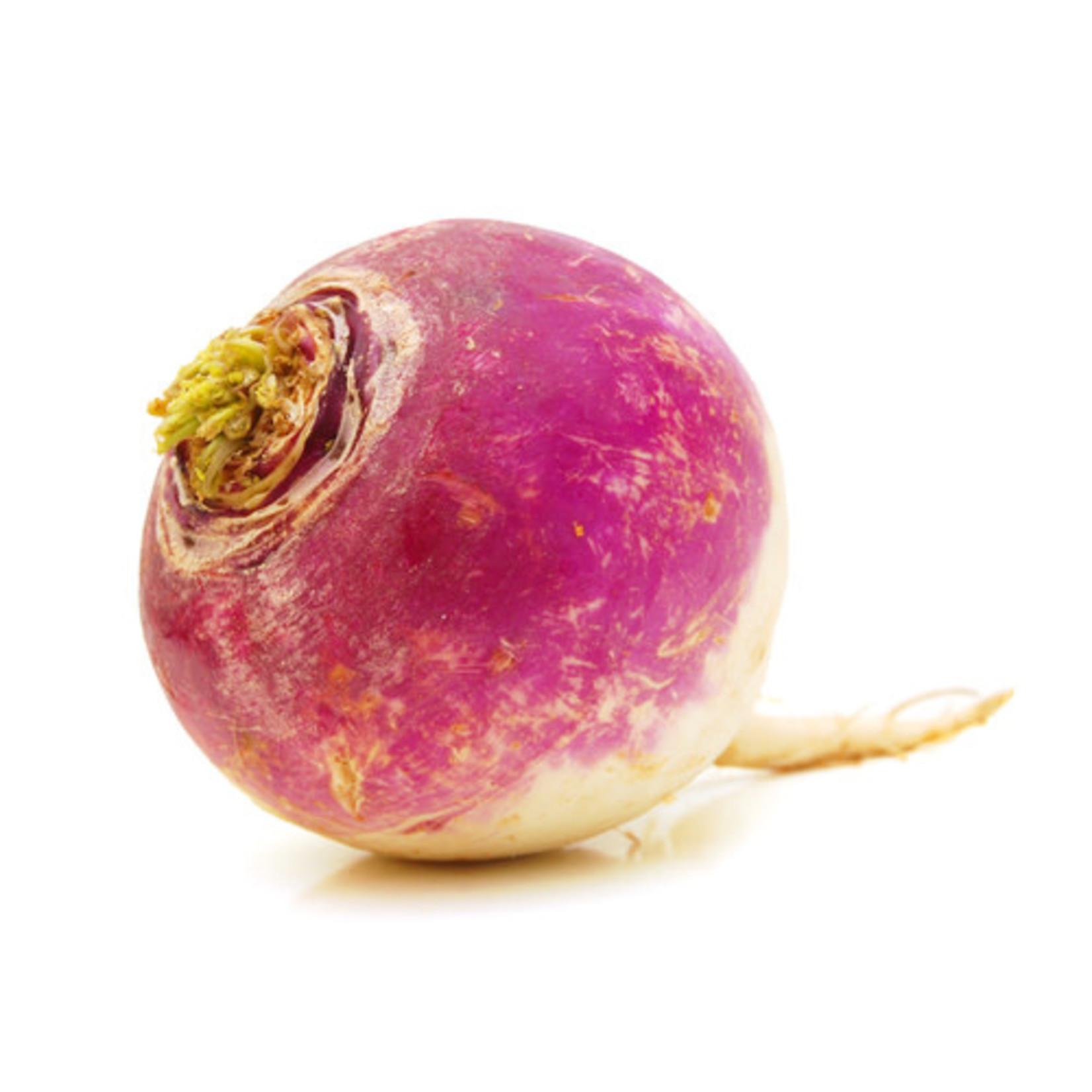 Summer Turnip (seed pkg) - Purple Top W. Globe