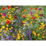 Annual Cutflower (seed pkg) - Cutflower Mixture