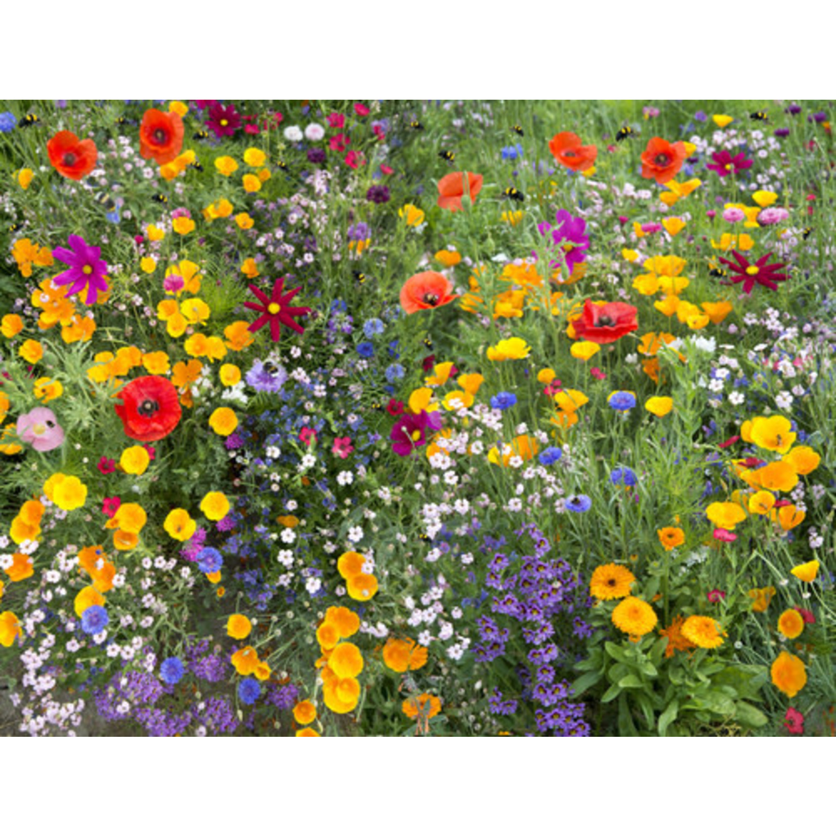 Annual Cutflower (seed pkg) - Cutflower Mixture