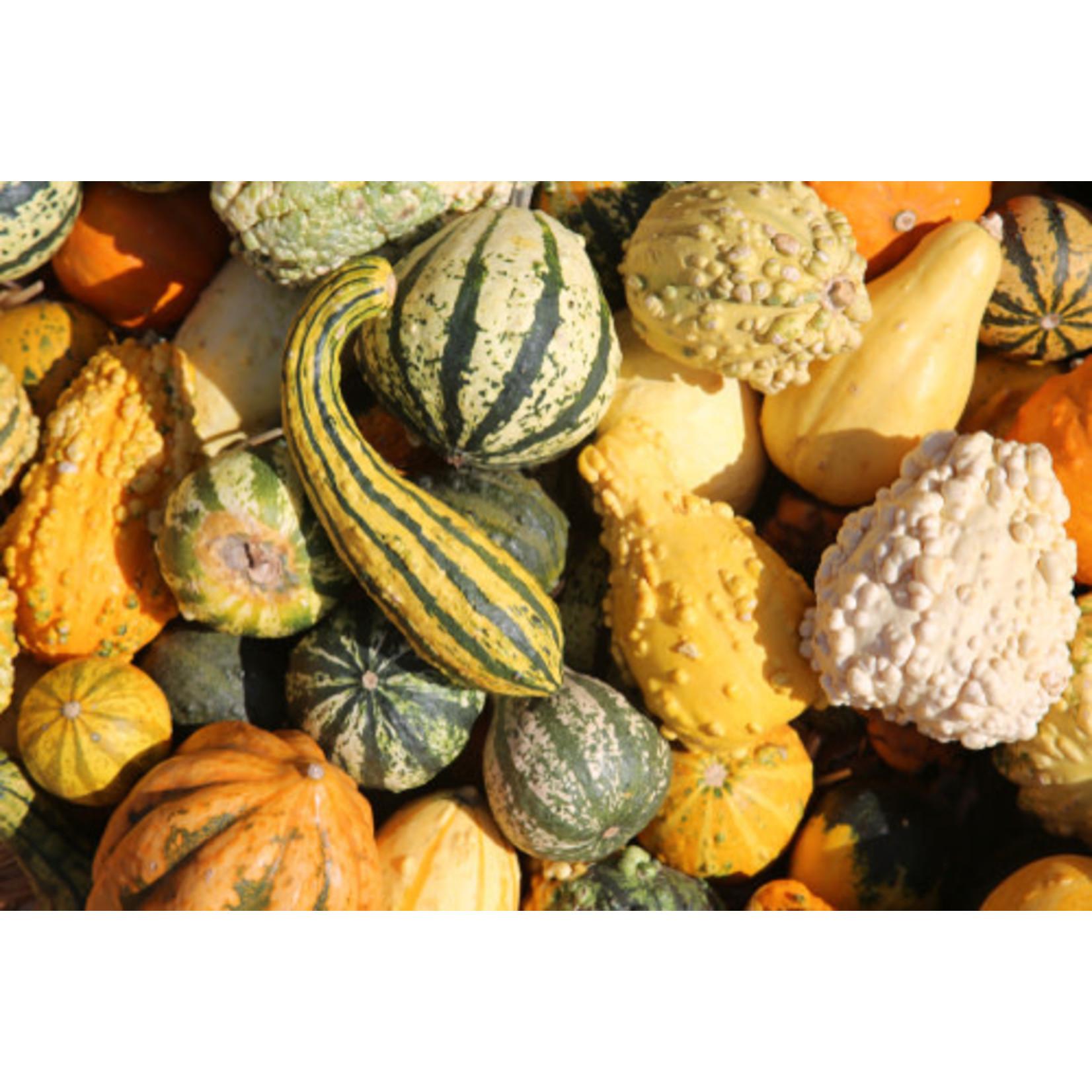 Gourds (seed pkg)