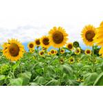 Sunflowers (seed pkg)