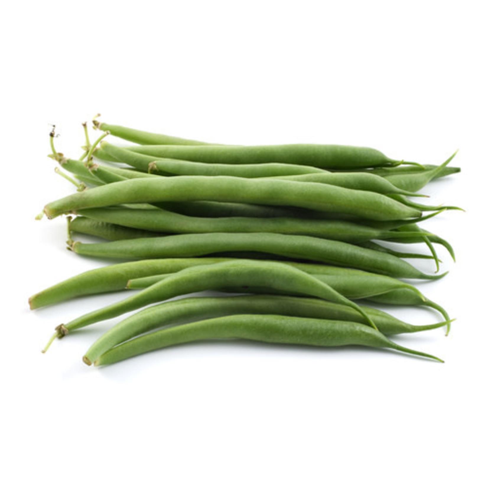 Beans ORGANIC (seed pkg)