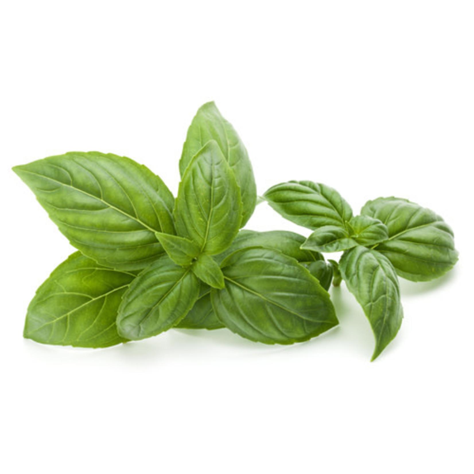 Basil ORGANIC (seed pkg)