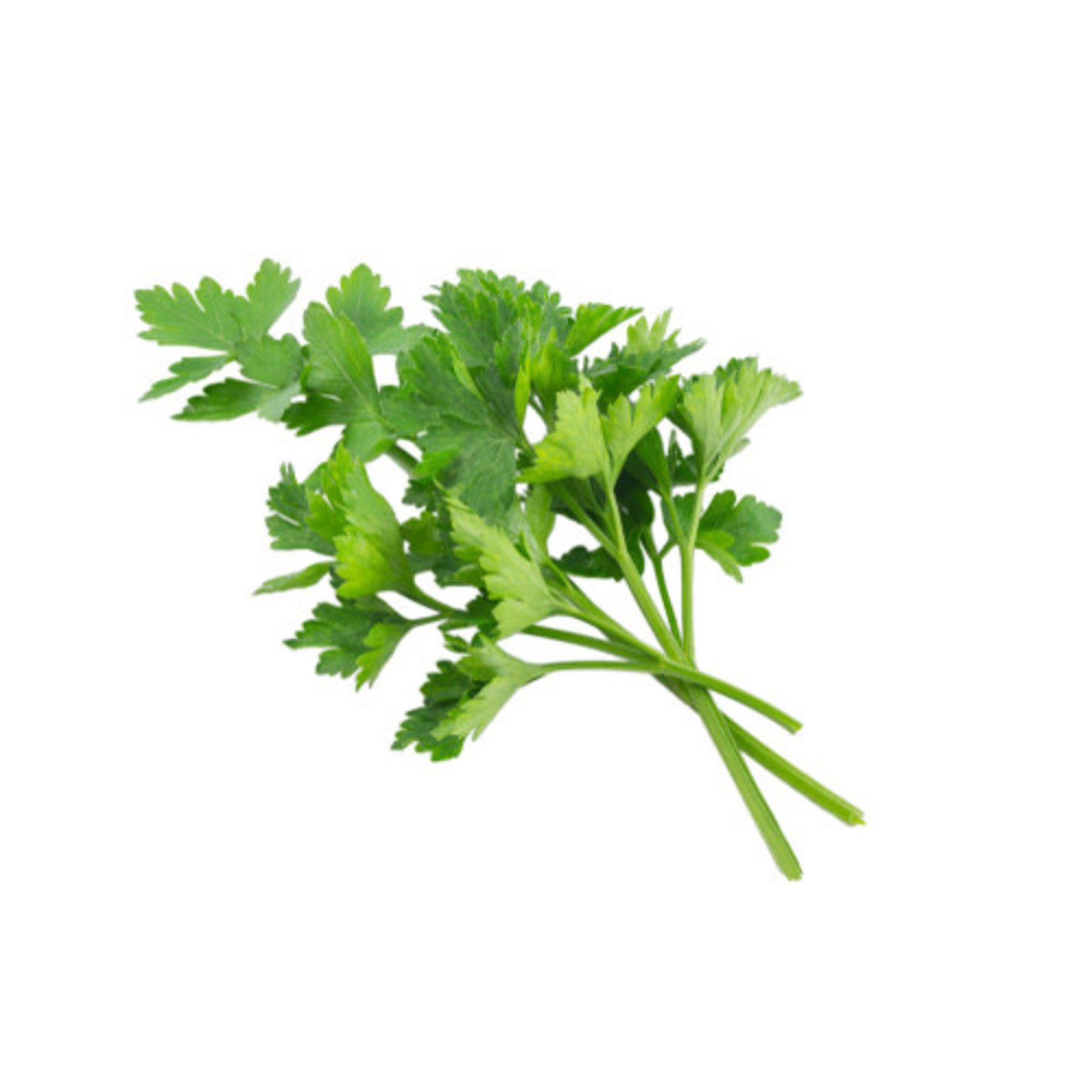 Parsley ORGANIC (seed pkg)