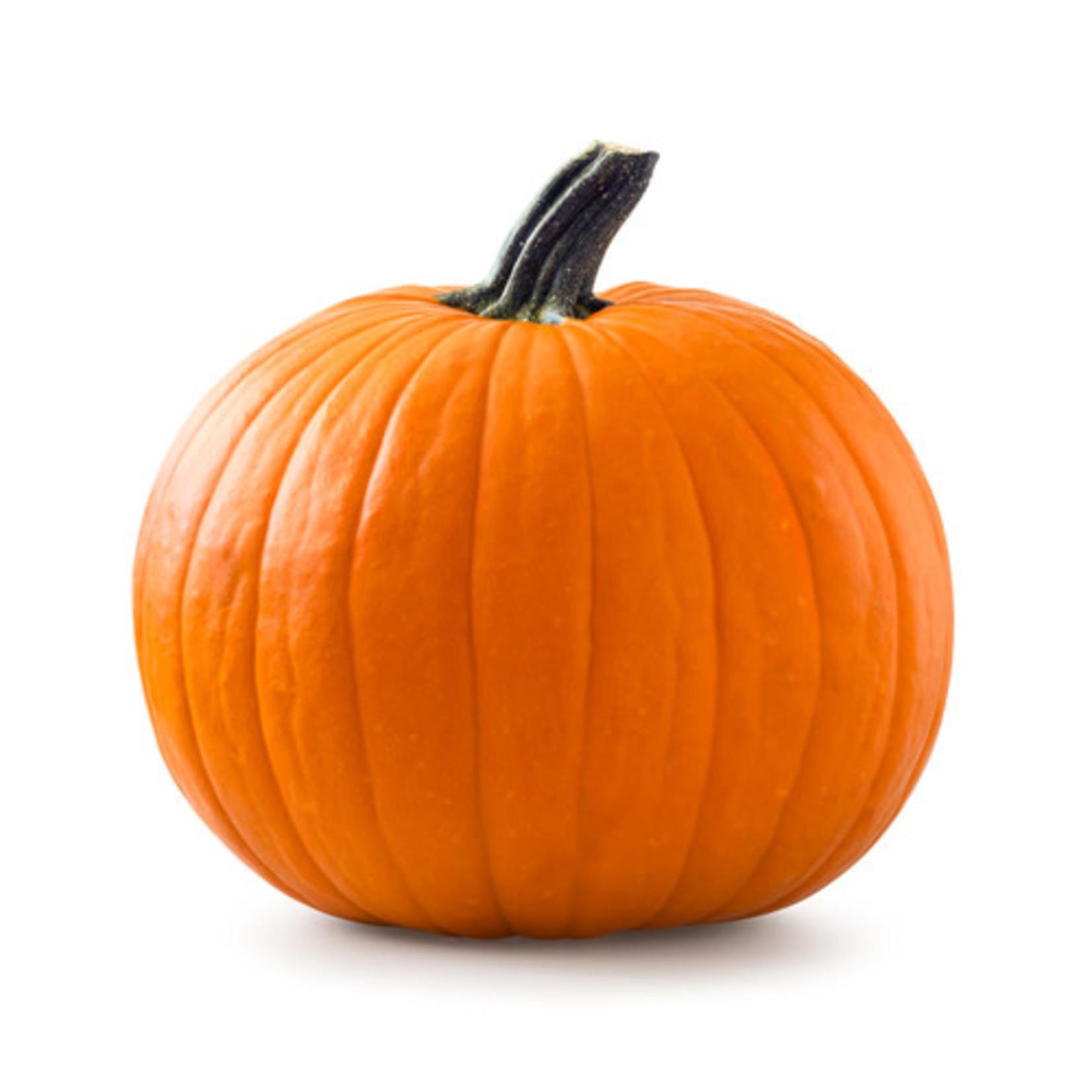 Pumpkins ORGANIC (seed pkg)