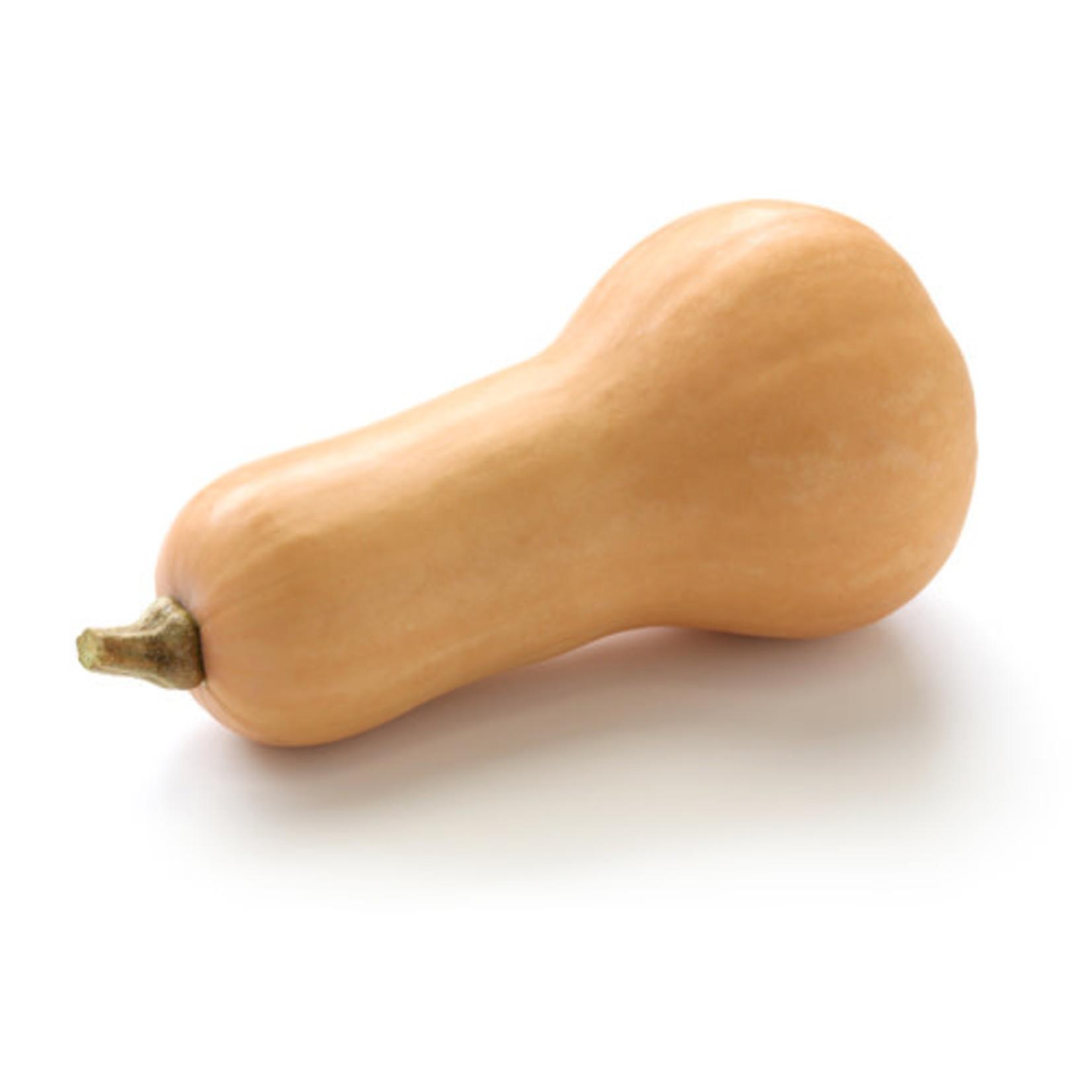 Squash ORGANIC (seed pkg)