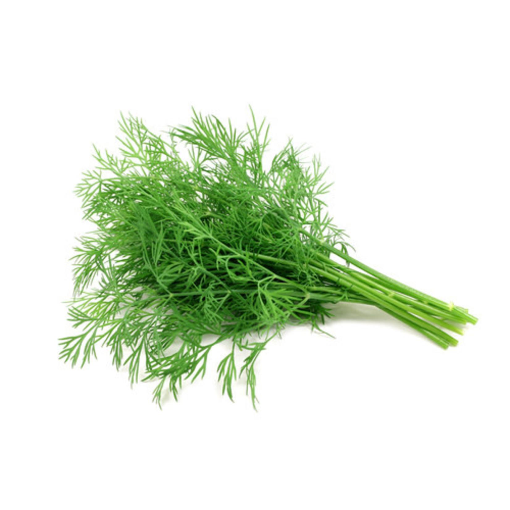 Dill ORGANIC (seed pkg)