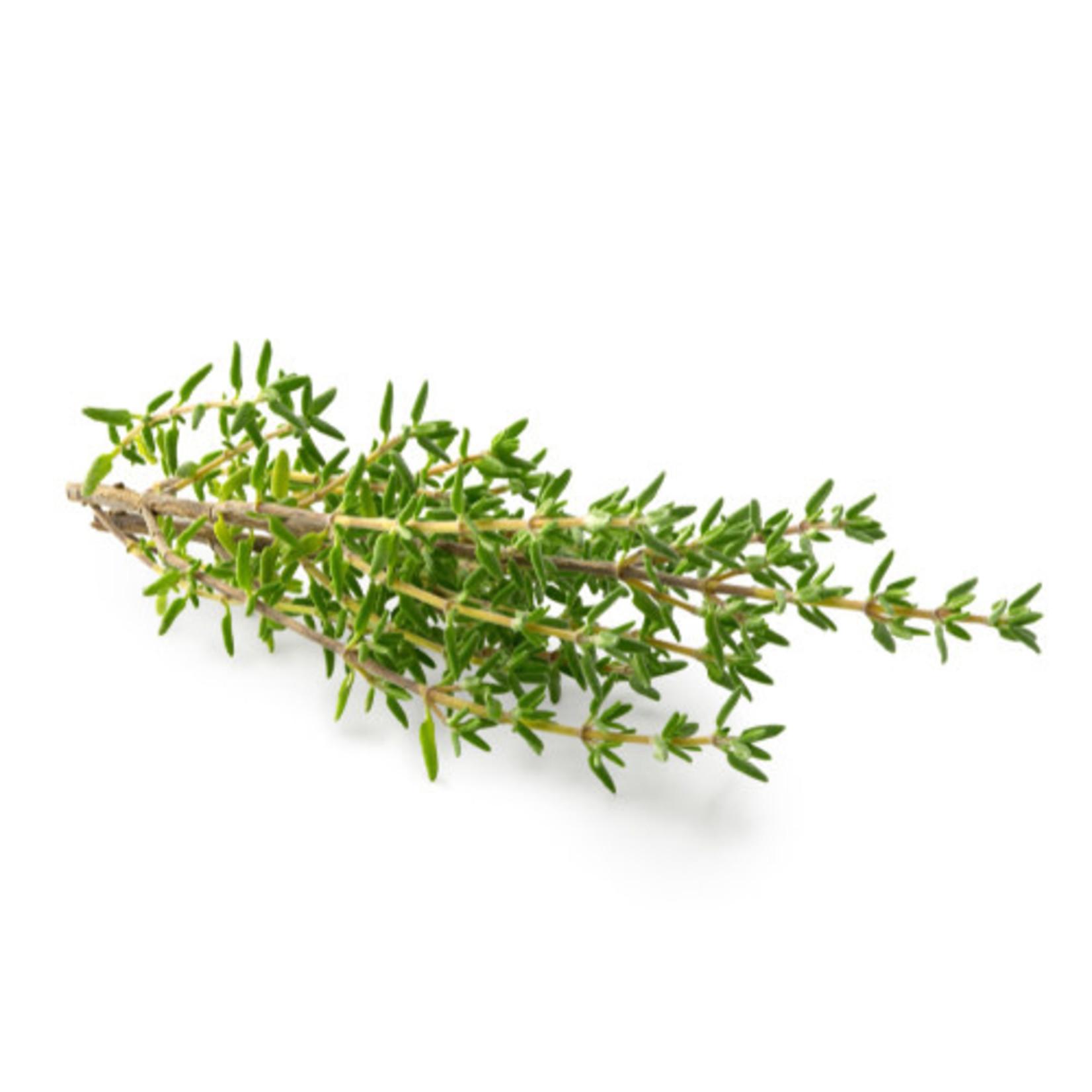 Thyme ORGANIC (seed pkg)