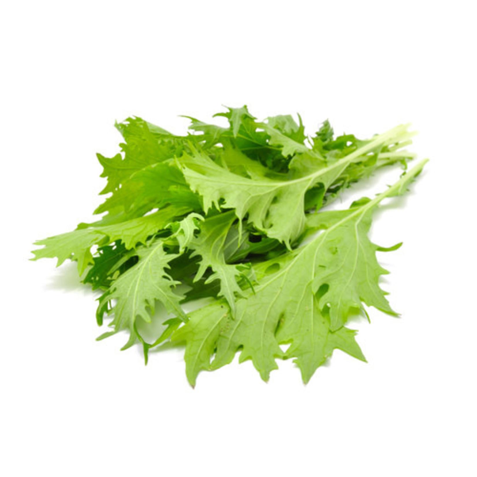 Lettuce Greens ORGANIC (seed pkg) - Mizuna