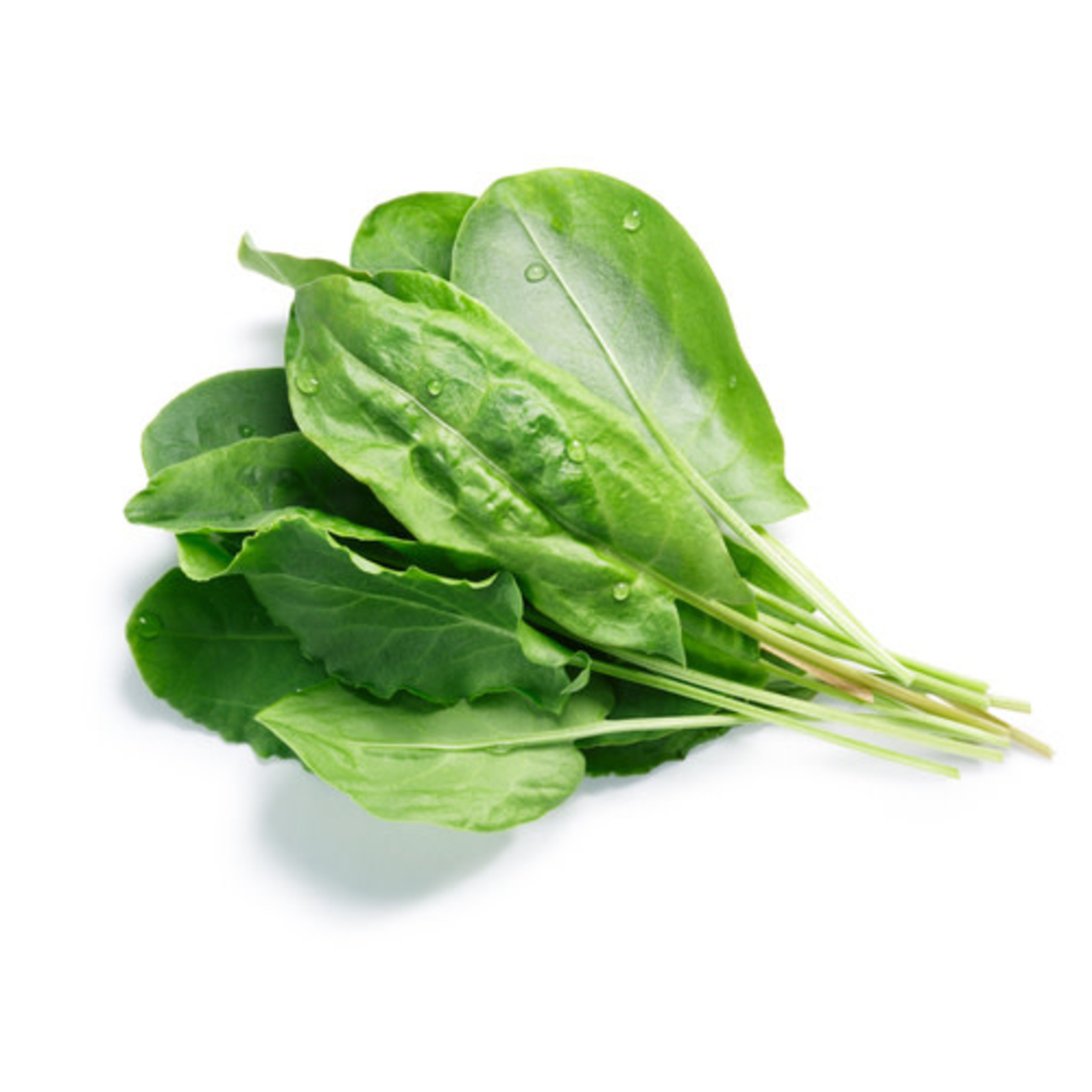 Spinach ORGANIC (seed pkg) - Bloomsdale