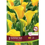 Calla Lilies (bulb pkg) Summer Sun yellow (1 bulb)