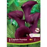 Calla Lilies (bulb pkg) Captain Promise dark purple (25 bulbs)