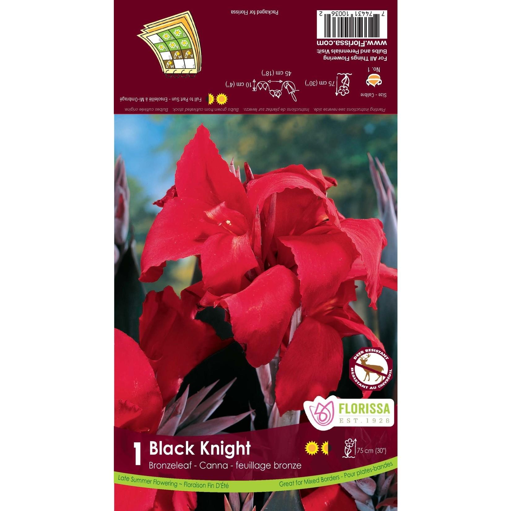 Canna Lilies (bulb pkg) - Bronzeleaf Black Knight (1 bulb)