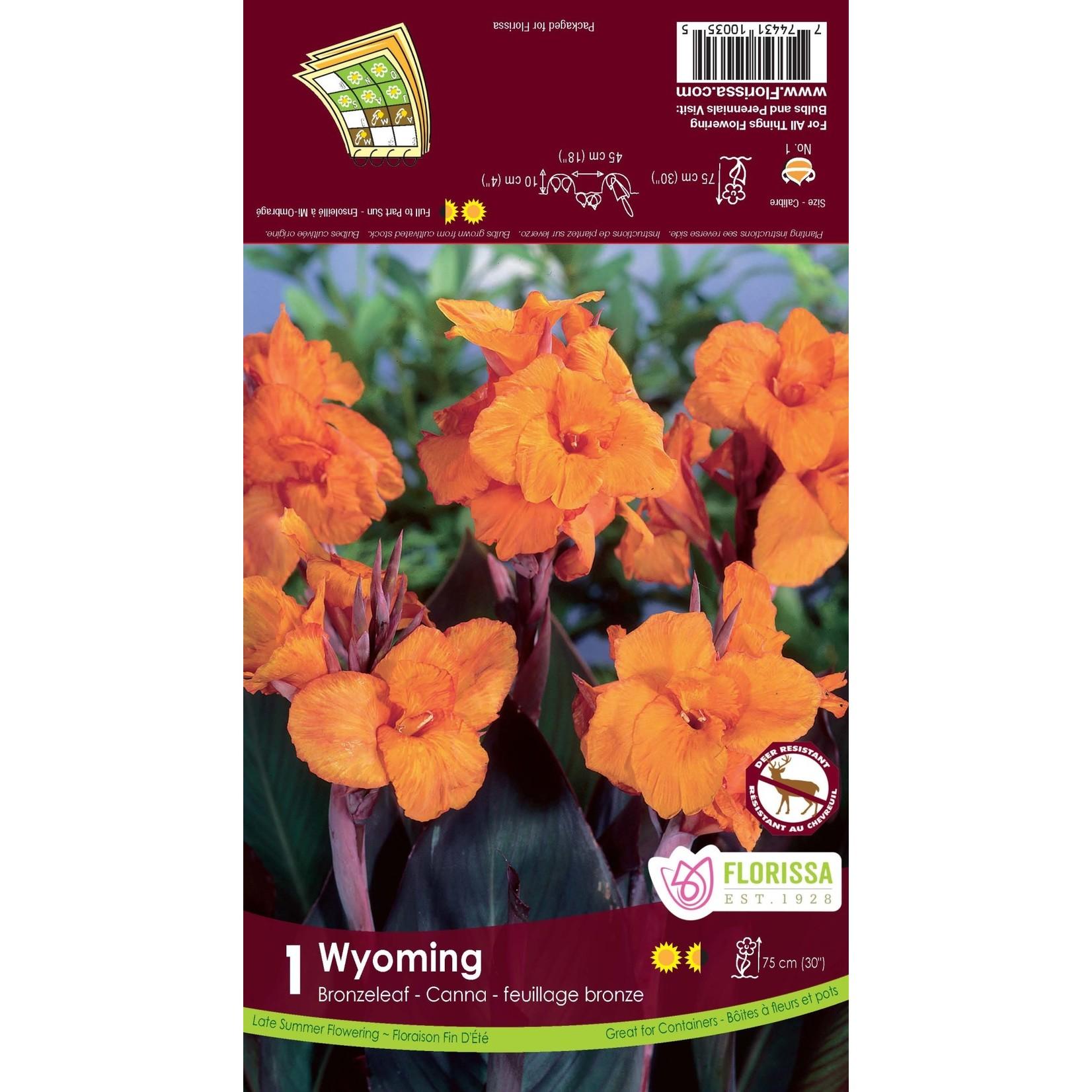 Canna Lilies (bulb pkg) - Bronzeleaf Wyoming (1 bulb)