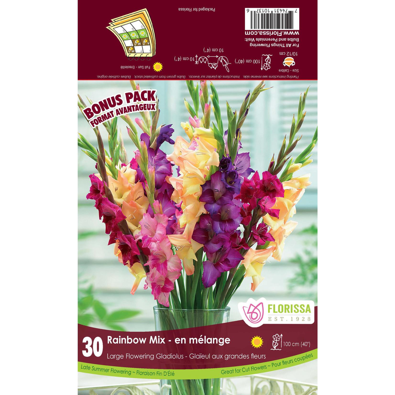 Gladiolus (bulb pkg) - Rainbow Mix (30 bulbs)