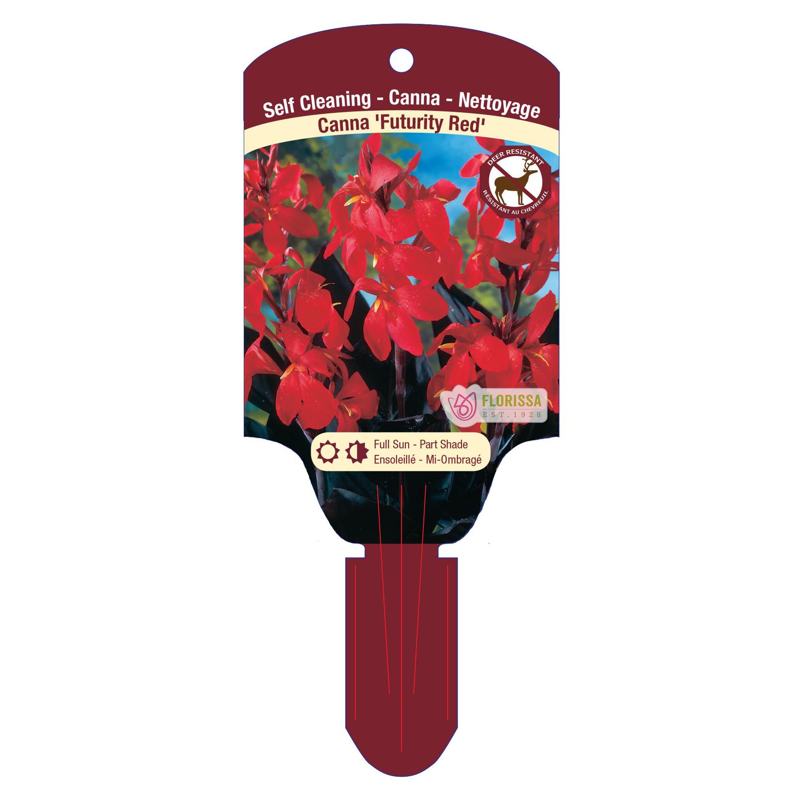 Canna Lilies (bulb pkg) - Futurity Red (25 bulbs)