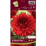 Giant Dinnerplate Dahlia (bulb pkg) Babylon Red (1 bulb)