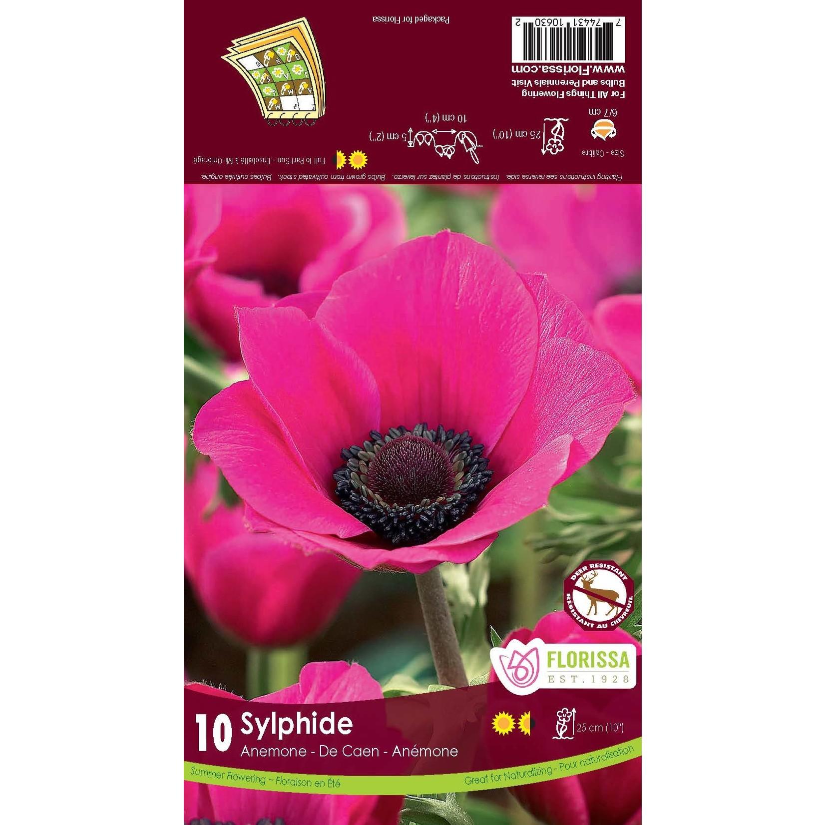 Anemone De Caen (bulb pkg) Sylphide (10 bulbs)
