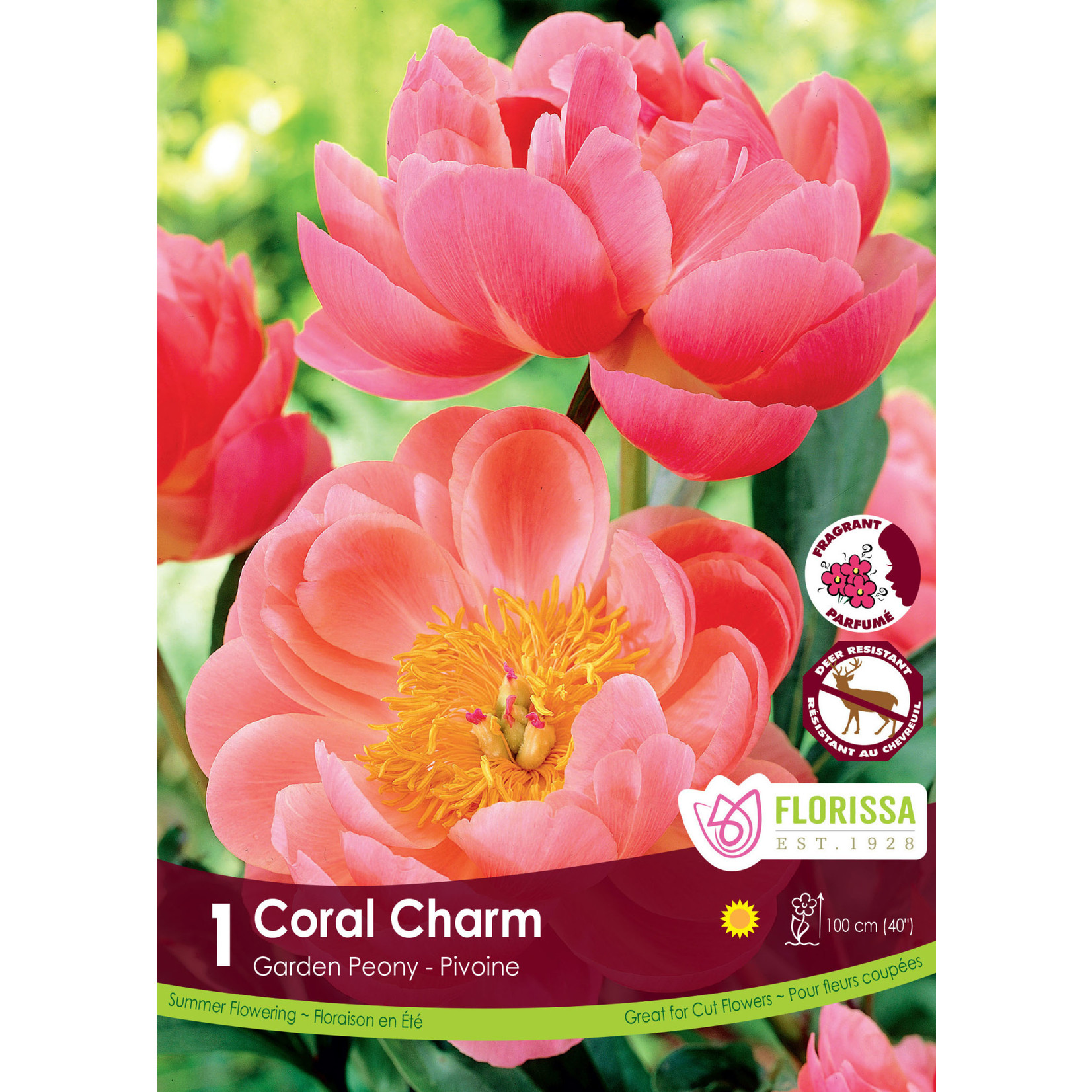 Paeonia (root pkg) Coral Charm (1 root)