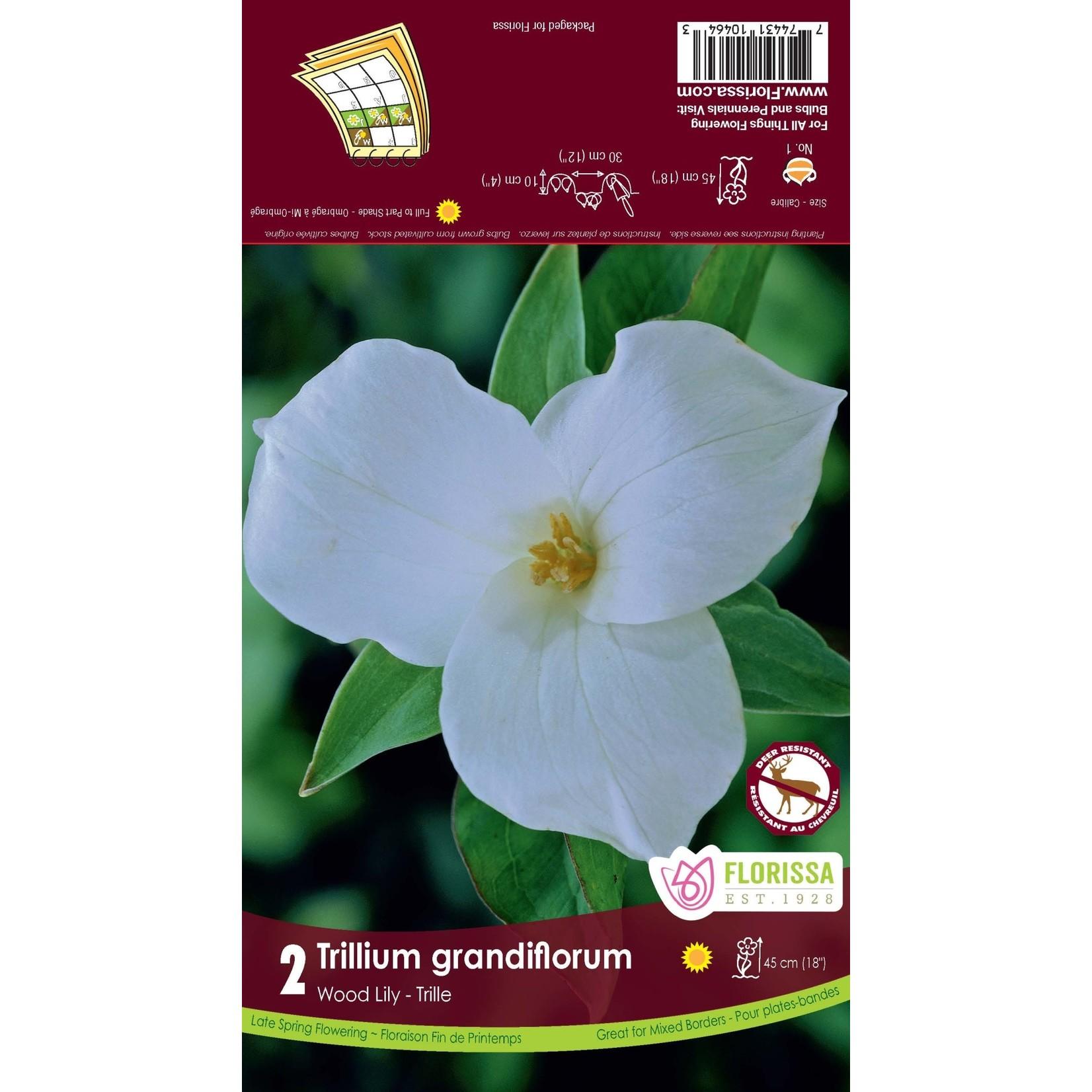 Trillium (root pkg) Grandiflorum (2 roots)