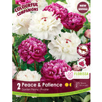 Peony (root pkg) Peace & Patience (2 roots)