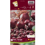 Onion Set : Red (80 bulbs)