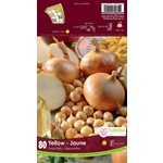 Onion Set: Yellow (80 bulbs)