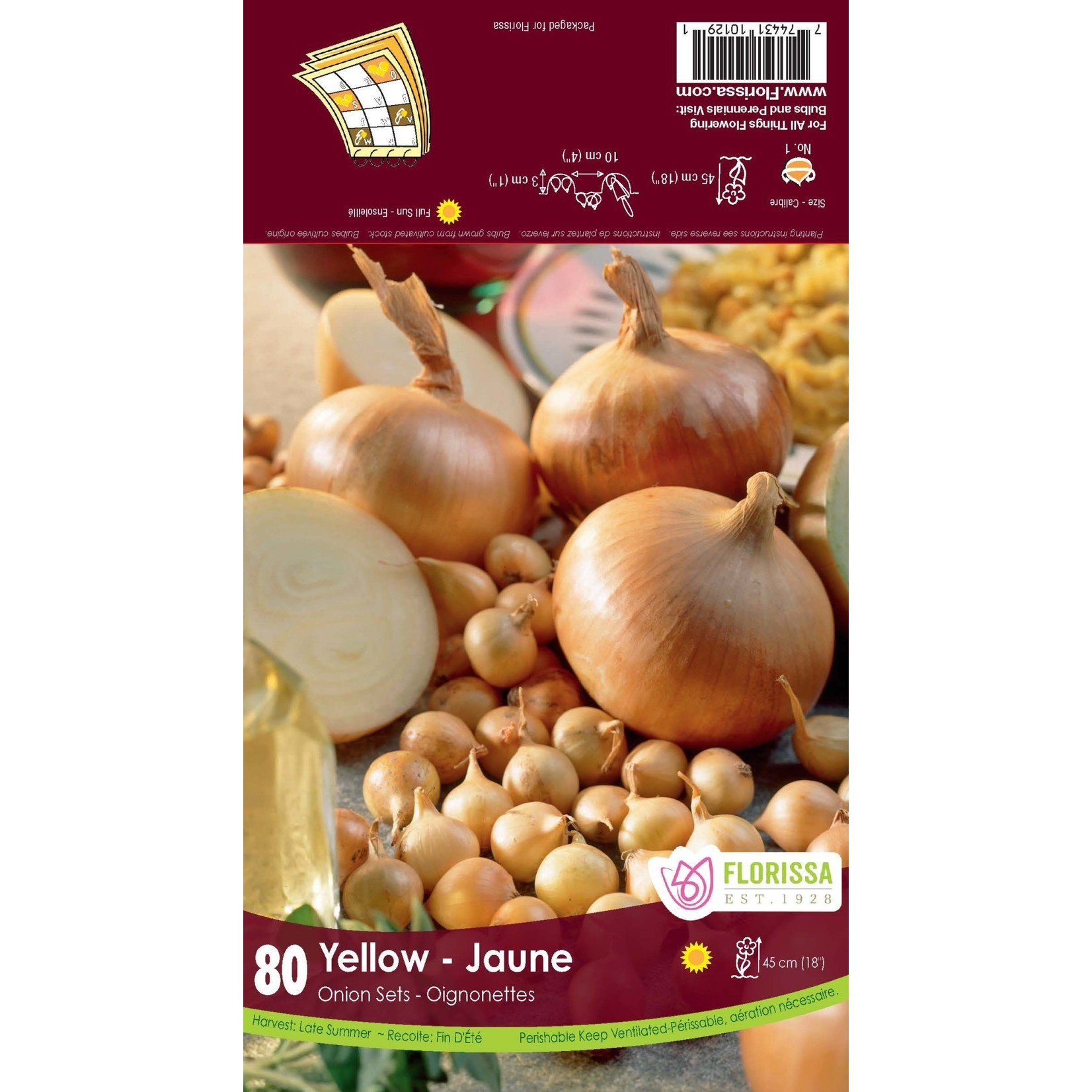 Onion Set: Yellow (80 bulbs)